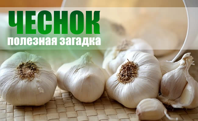 garlic health