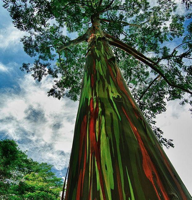 необычные деревья-13