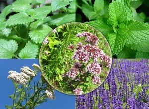 Полезные свойства травяных соков