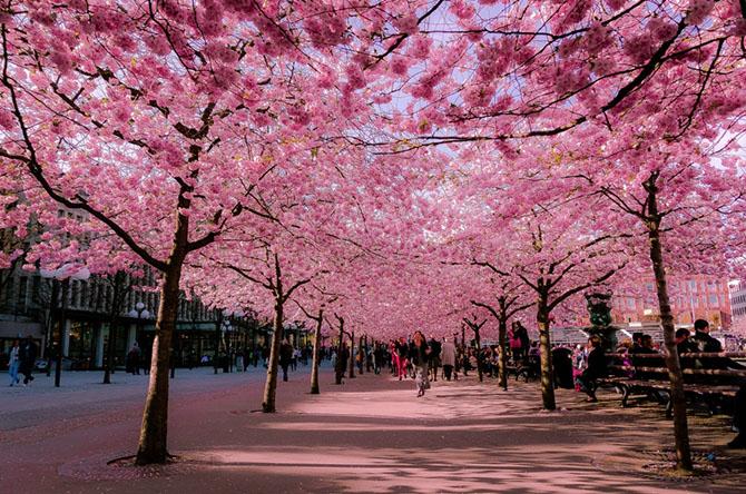 16 прекрасных улиц, расцветающих с приходом весны