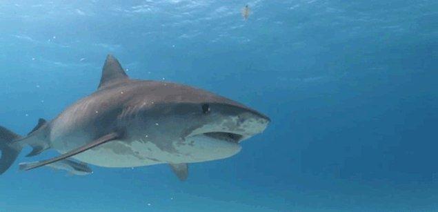 Вместо форели и других местных рыб подается акулье мясо.