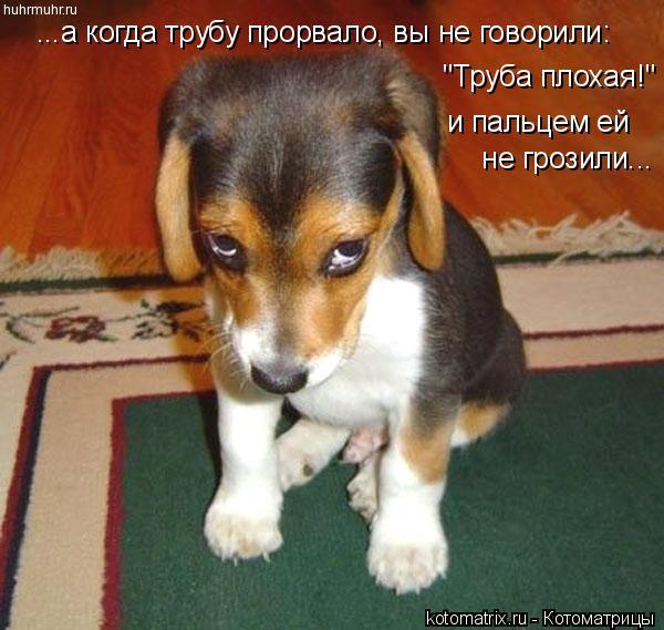"""Котоматрица: ...а когда трубу прорвало, вы не говорили: """"Труба плохая!"""" и пальцем ей   не грозили..."""