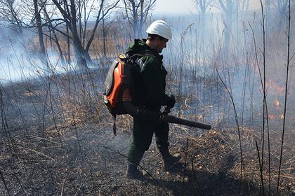 В России дадут сгореть тысячам гектаров леса в целях экономии
