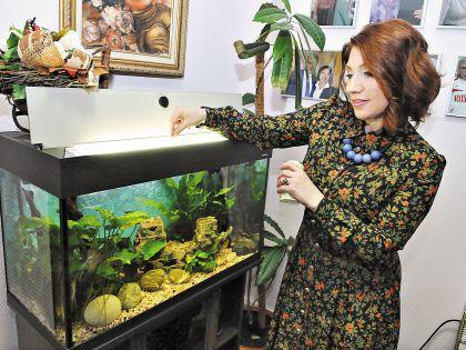 Телесваха очень любит аквариумных рыбок
