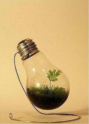 мини-сад в лампочке