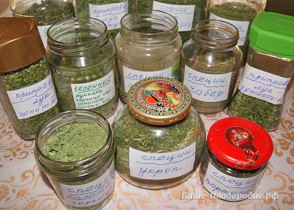 Моя пряная аптечка с огорода