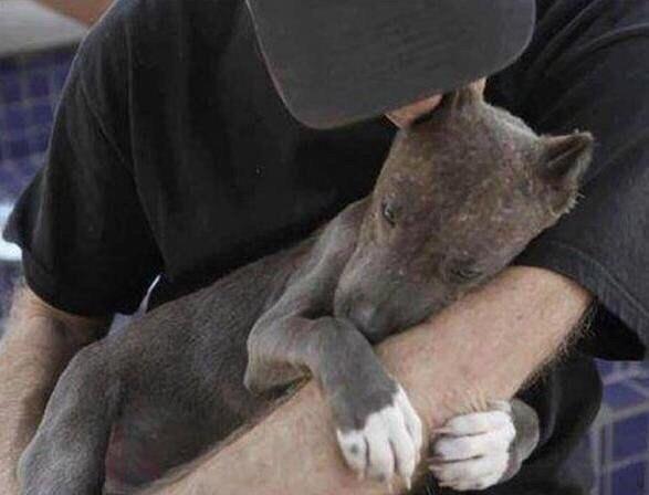 Мир не изменится из за спасения собаки, но для собаки, мир изменился навсегда.