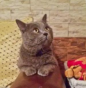 Три истории о кошках и собаке, которых спасли от усыпления
