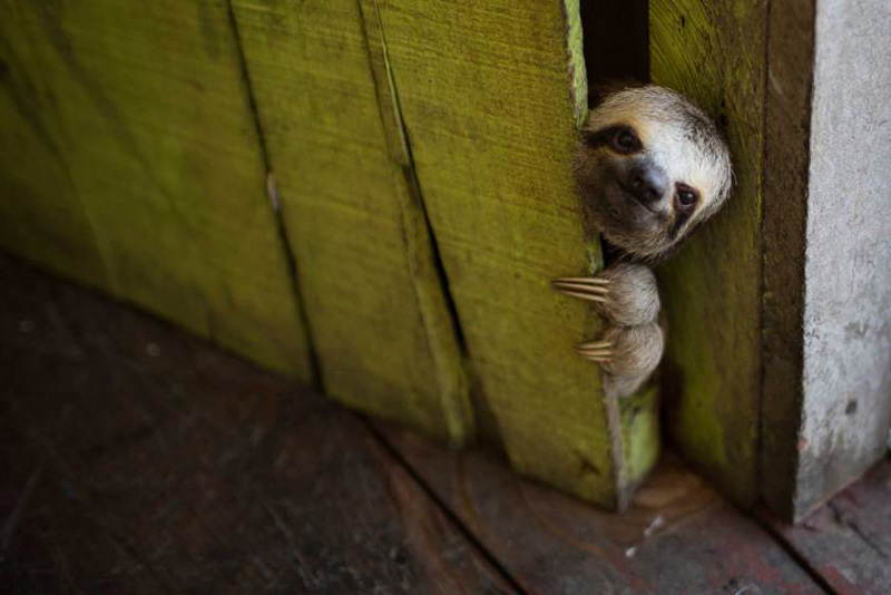 Животные и цивилизация: 25 уникальных фотографий