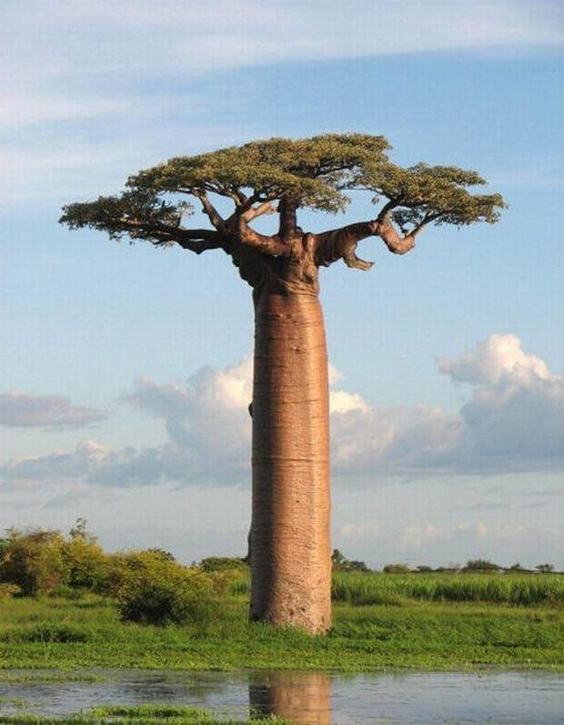 необычные деревья-7