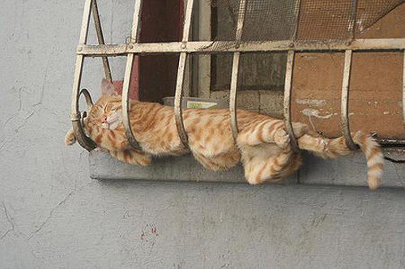 cats 15 25 кошачьих поз для сна