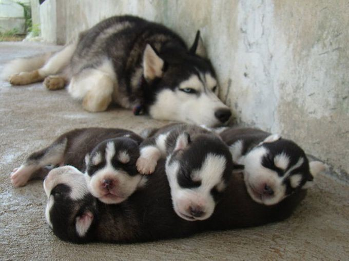 14. «Спите-подрастайте» животные, потомство, собаки
