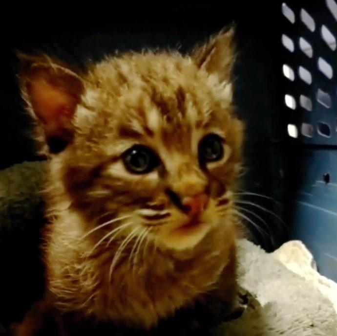 «Никакой это не котёнок!» Мужчина спас малыша из-под машины, а его чуть не отругали