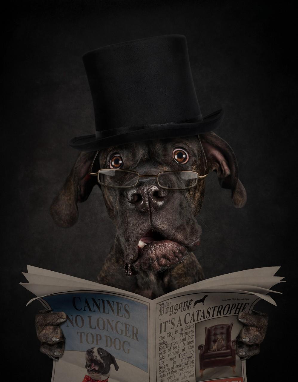 А если бы собака была человеком? 10 ярких фото, которые ответят на этот вопрос