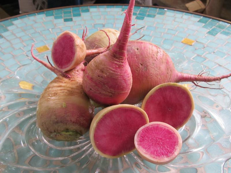 Арбузный редис дача, овощи