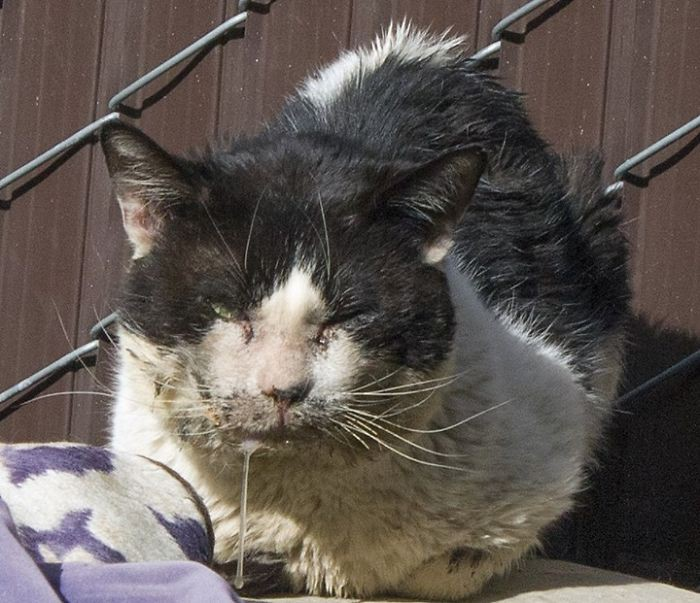 Дженнифер Мур и умирающий кот