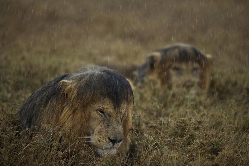 Ну не любит он дождь. И можно понять почему. в нужный момент, прикол, юмор