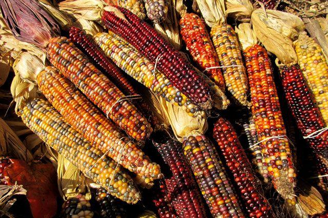 Кукуруза цвета радуги. Чем опасны овощи и фрукты несвойственных им оттенков