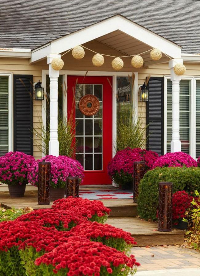 Фото цветов вокруг дома