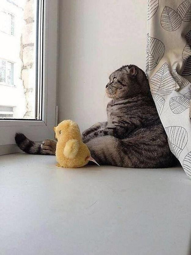 lolcats05 100 лучших фотографий кошек всех времен и народов