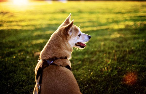 ТЕРЕМОК. Что делать, если потерялась собака?