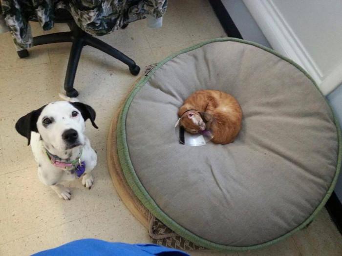 Полностью поправить здоровье Рассела не получится, но в клинике его ждет хорошая жизнь животное, забота, кот, спасение