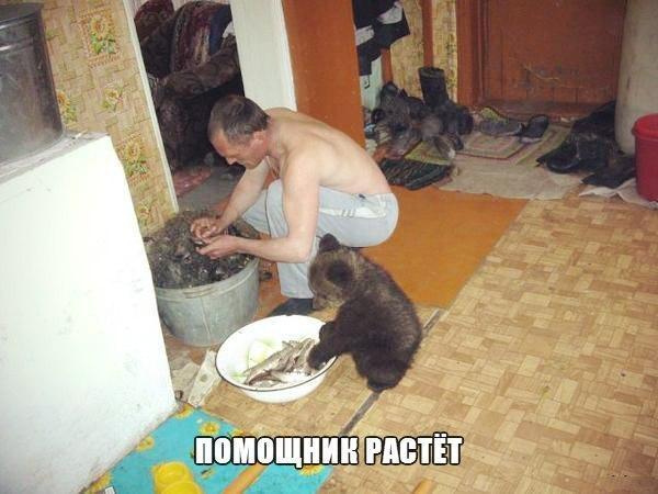 """Немного о несерьезном. """"Медведь в России больше, чем медведь"""""""