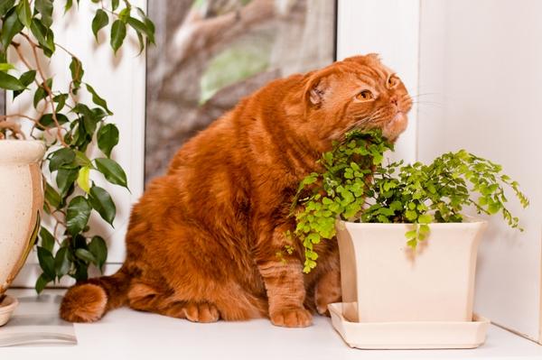 Комнатные растения и домашние животные — как совместить несовместимое