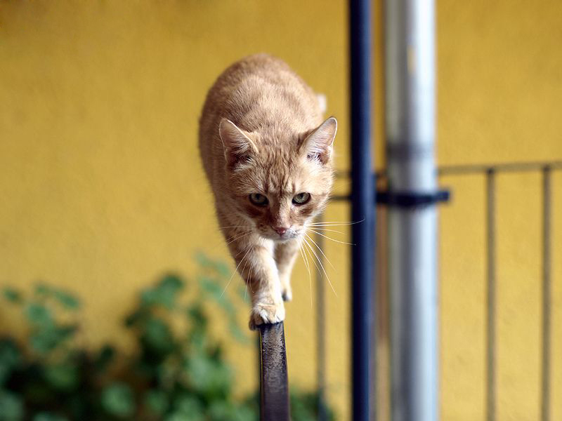 Сегодня у нас «История о коте…» или  ржака до слез )))