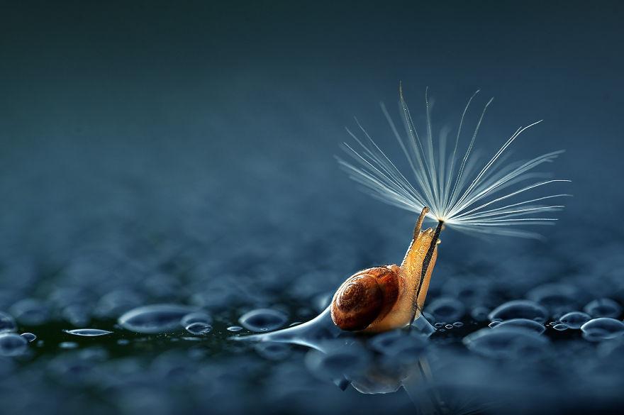 «Кажется, дождь собирается» животные, зонтик