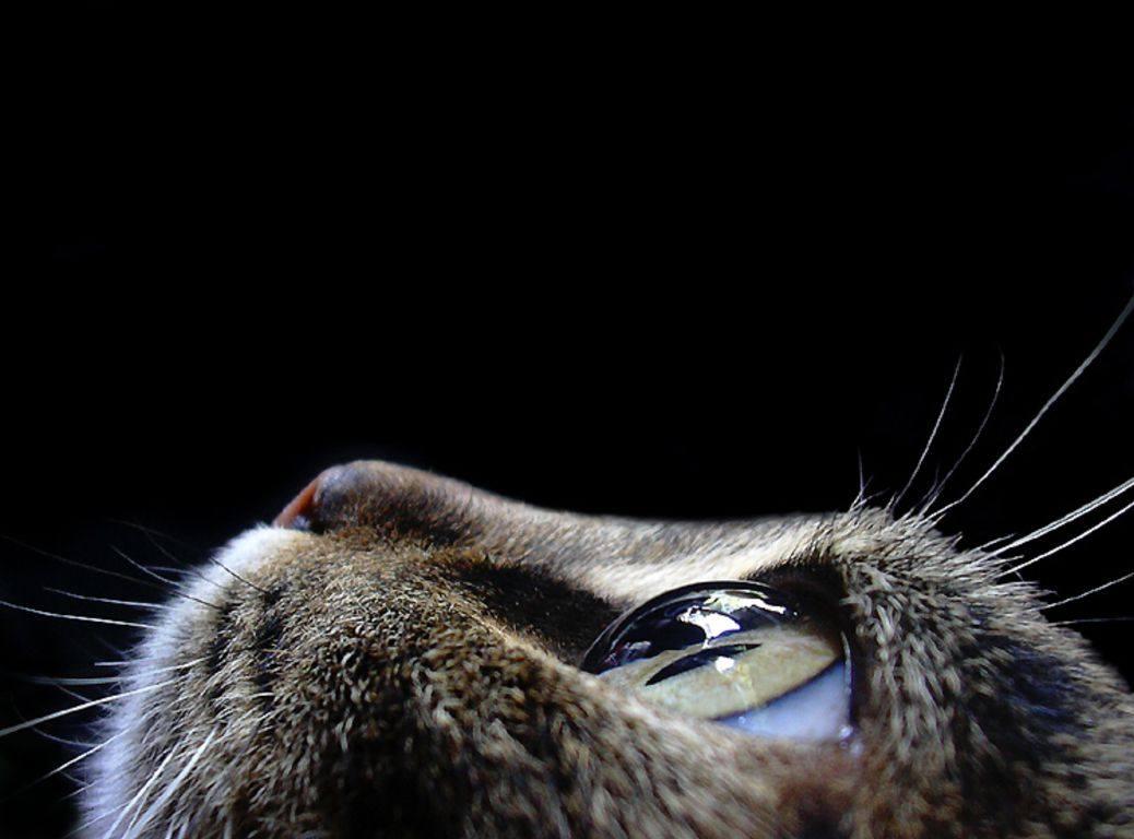 Кошачья раса. Все о кошках. Видео