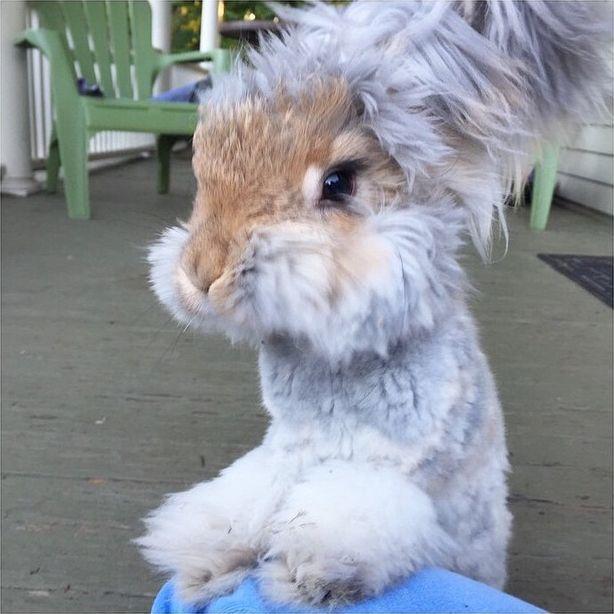 Картинки по запросу Валли, кролик с самыми потешными ушами на свете