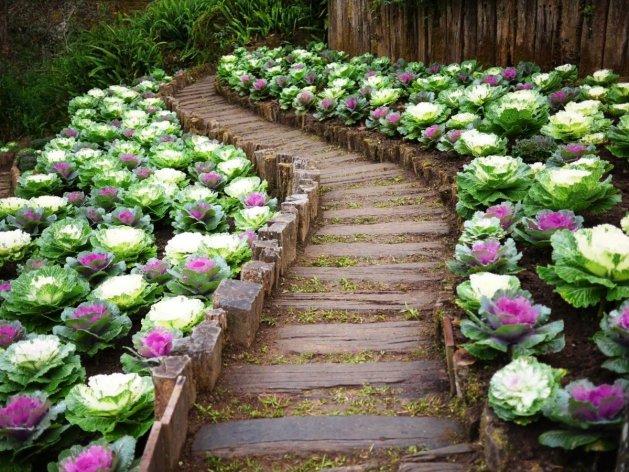 25 невероятно красивых овощных садов. Бонус: советы по их созданию