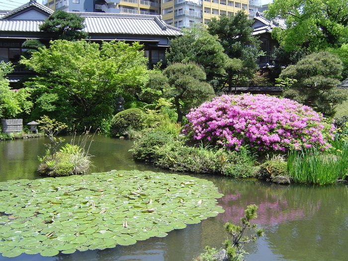 Японский сад (6) (700x525, 402Kb)