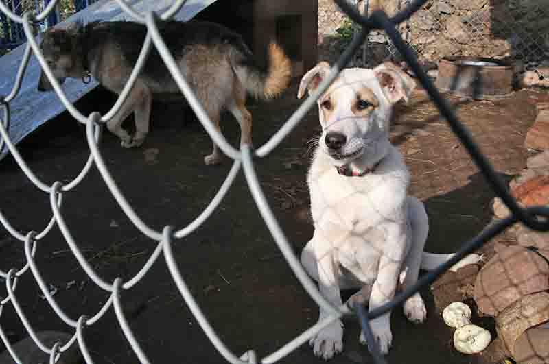 Убийство собак в приюте Москвы: люди митингуют и умоляют выдать оставшихся.