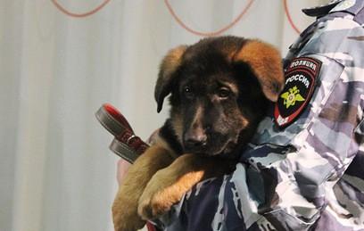 Подаренный Россией Франции щенок Добрыня прибыл в Париж