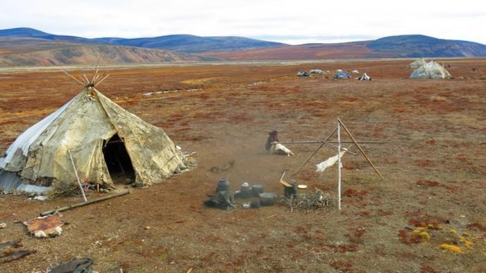 Где и как живут чукотские оленеводы быт, оленеводы, чукотка, яранги