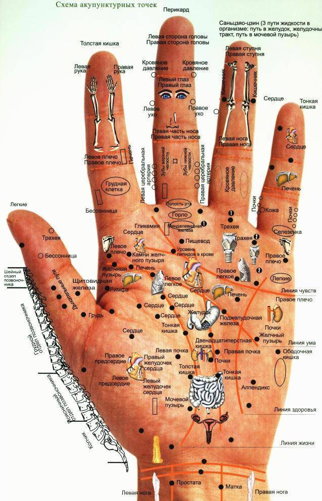 Точечный массаж кистей рук для снижения аппетита и не только