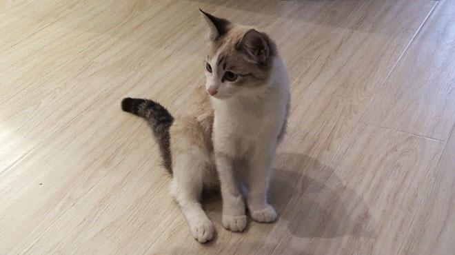 В Новосибирске котенок выжил, упав на «лексус» с 19-го этажа