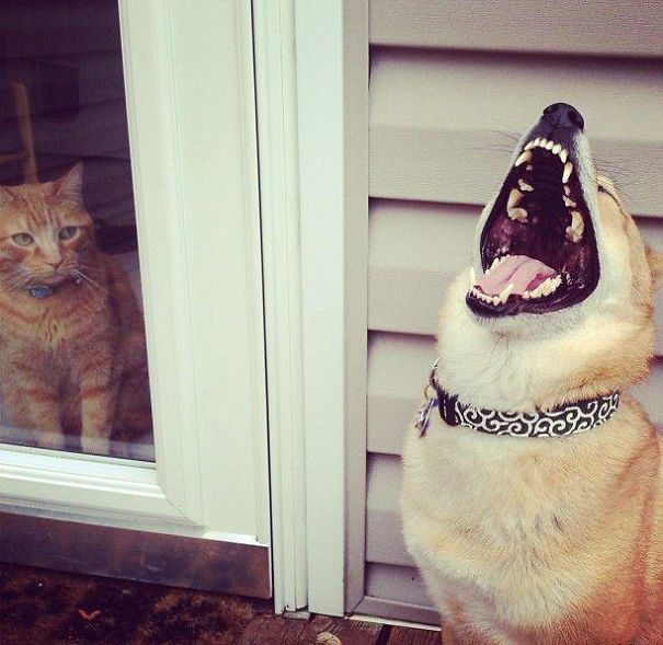 Фотографии о том, как хулиганят собаки