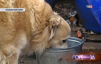 Из подмосковного приюта могут выселить почти 600 собак