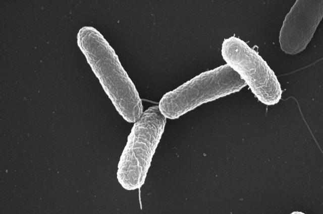 Большинство штаммов сальмонеллы неуязвимы для антибиотиков - ученые