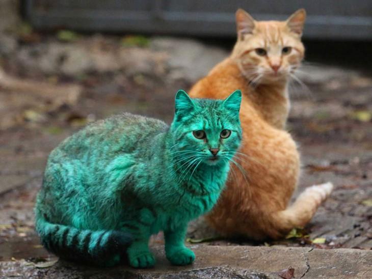 Поразительные факты о котиках
