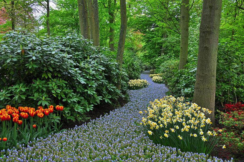 Плывет и манит аромат цветов