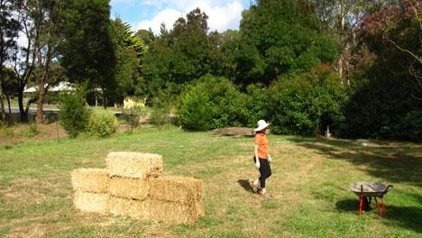 Органическое земледелие, пермакультура: беспахотное земледелие