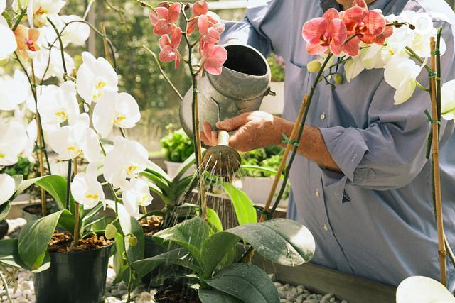 Календарь ухода за орхидеями