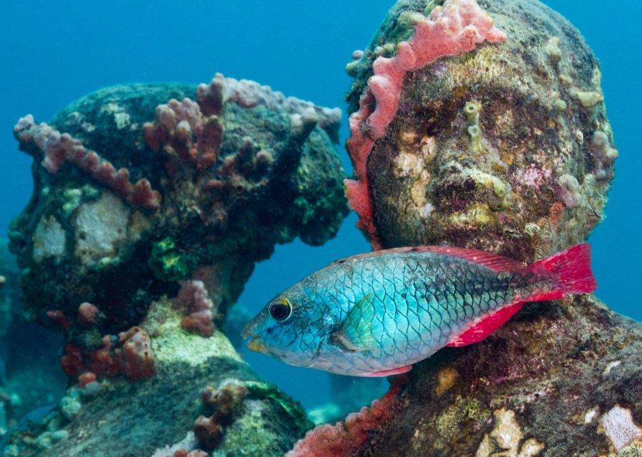 7 главных загадок подводного мира