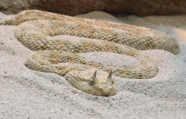 ТЕРЕМОК. 10 самых интересных животных пустыни Сахара