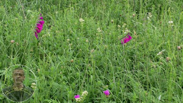 Там, где рос этот цветок, не ставили жилья на десятки километров вокруг