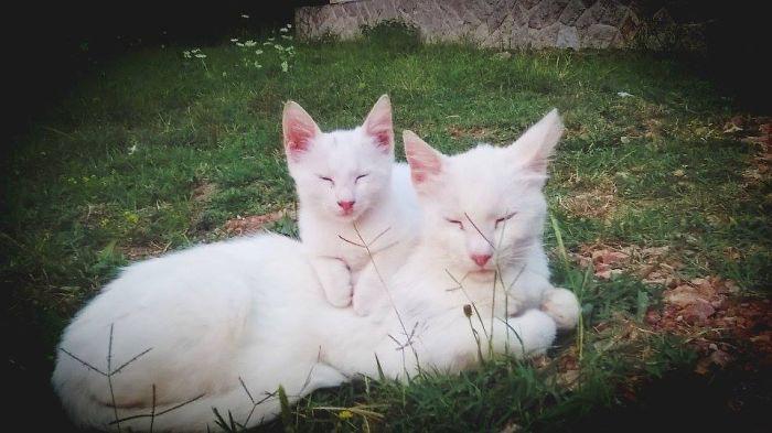 17. котенок, кошка
